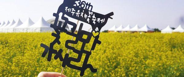 Jeju canola festival evidenza