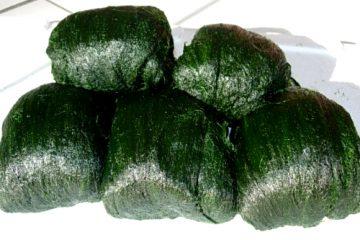 매생이 maesaengi alga